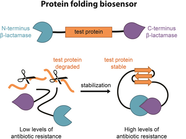 F Introduction to Protein Stability