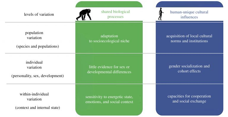 Foundations of human sociality a review essay c diff toxin essay
