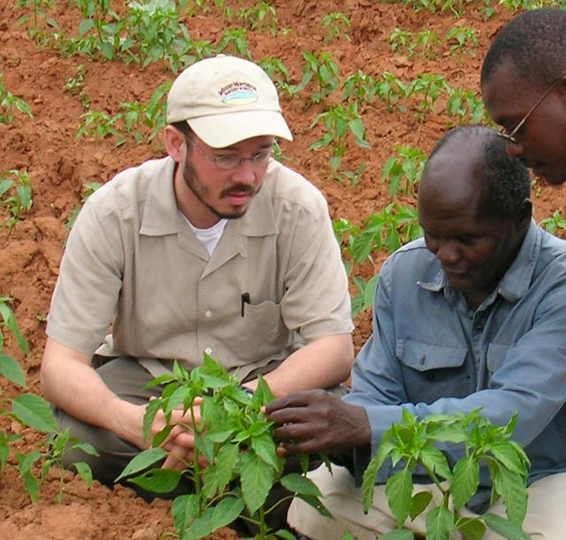 Inspecting young paprika plants in Malawi.