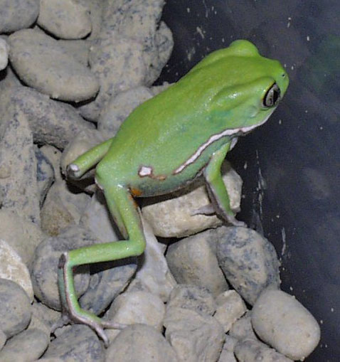 monkeyfrog4