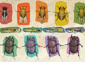 Illustration of flies, fish and beetles showing phenotypic differences