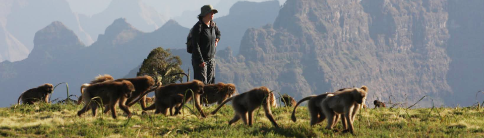 gelada_walking 960x275