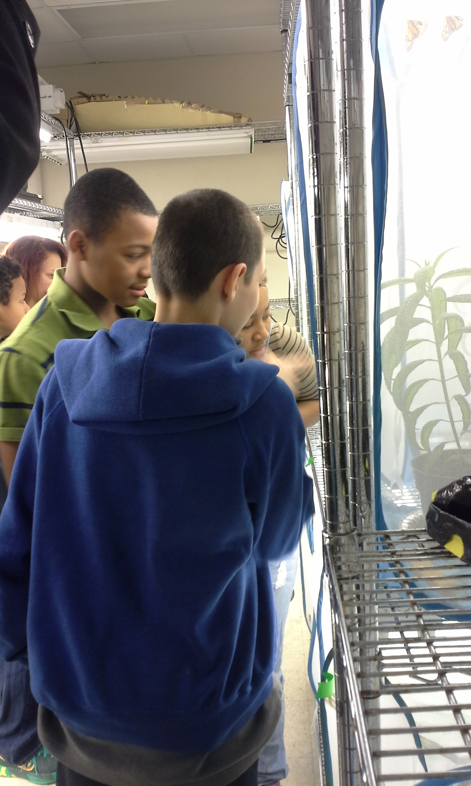 Middle-school students get a close-up look at monarch caterpillars