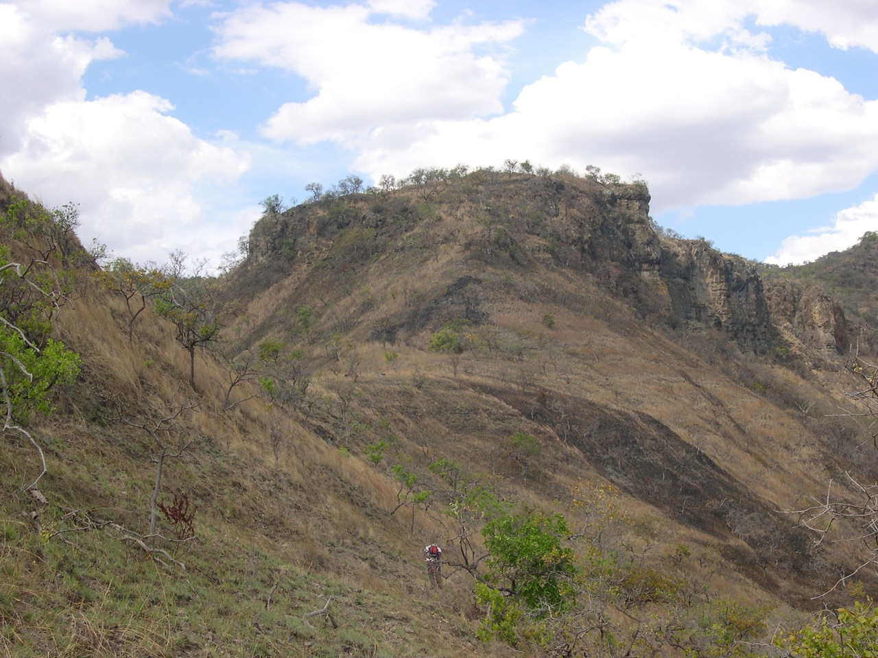 Robert Kityo prospecting for Early Miocene fossils at Napak I at Akism, Uganda. Site IX higher is on the slope above stratigraphically below aggolomerate capping the ridge.