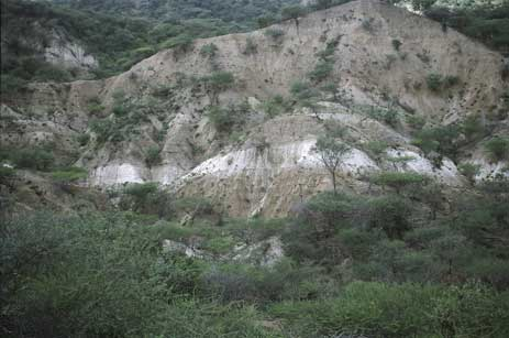 Alternating Pliocene lake and fluvial/alluvial fossiliferous sediments in Baringo Basin