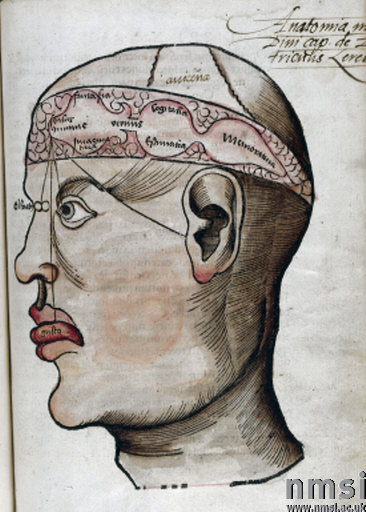 'The anatomy of the brain', 1535.