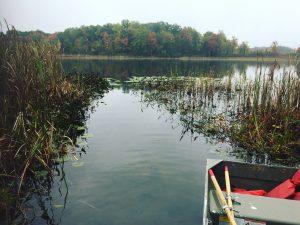 Field sampling in Cedar Lake (photo: Katherine McLean)