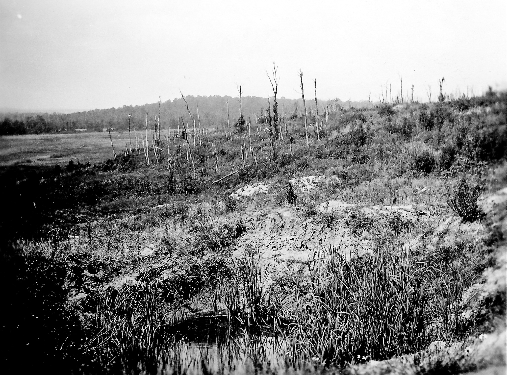 black and white photo of a parched field