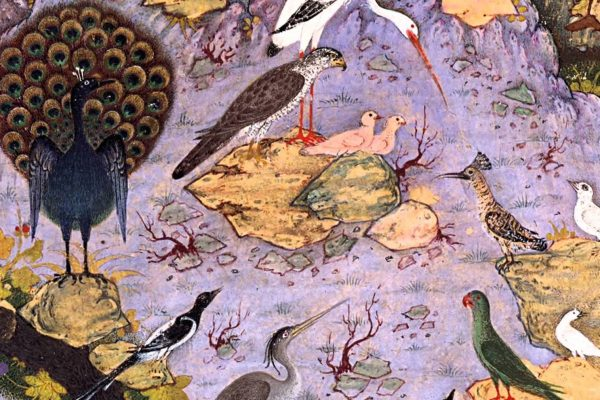 Image from The Canticle of the Birds