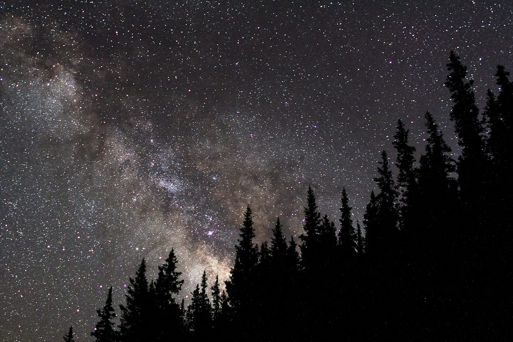 Milky Way sky behind a few tall pines within the White River National Forest