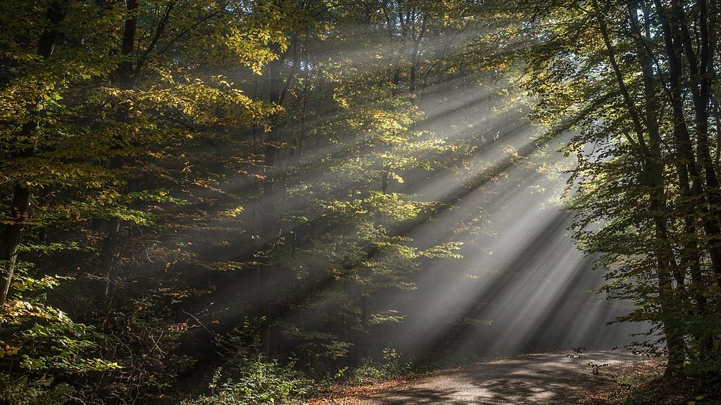light peaking into a forest