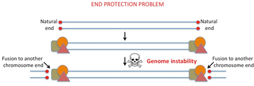 end protection problem