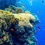 edge coral