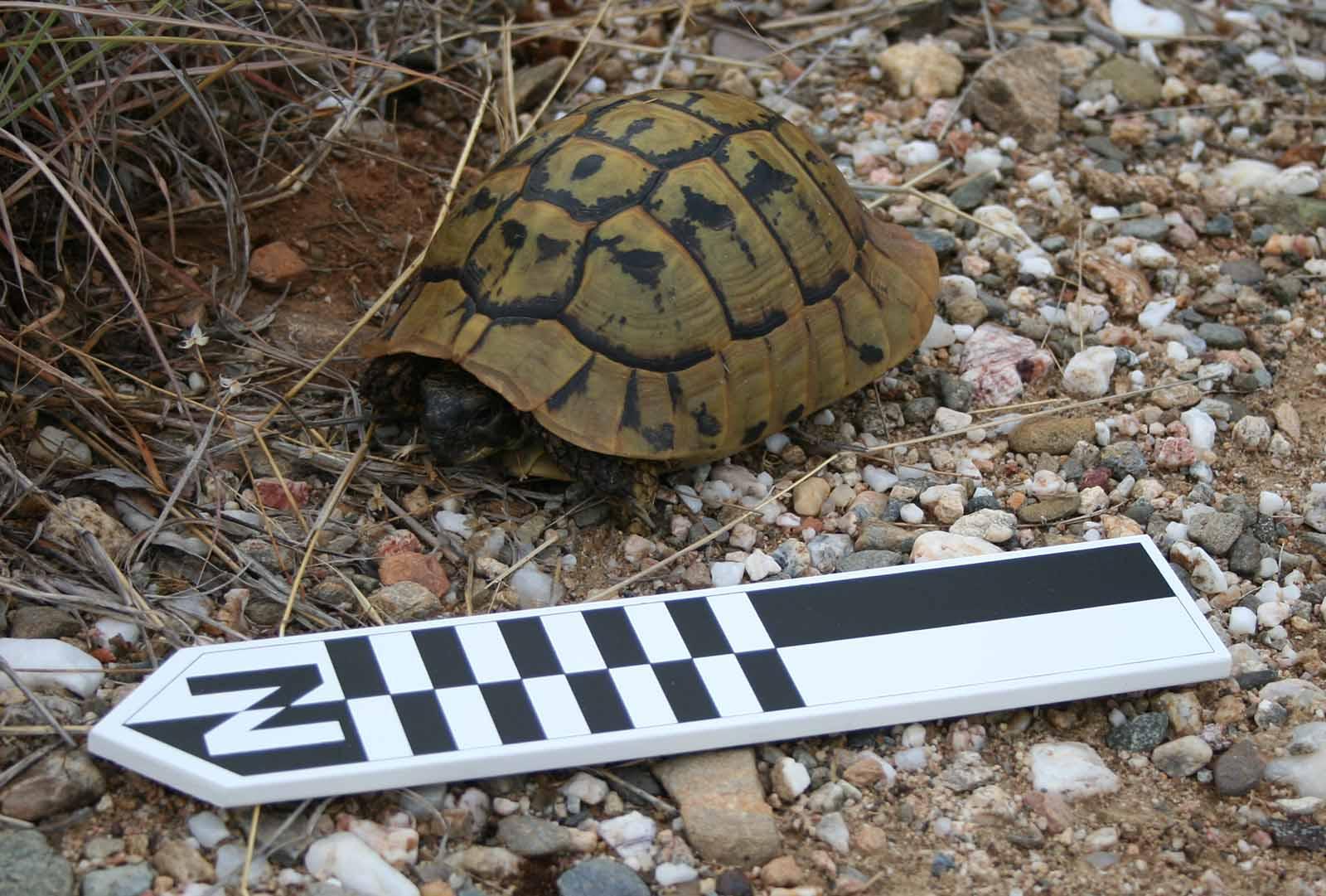 TortoiseNorthCroppedSmall