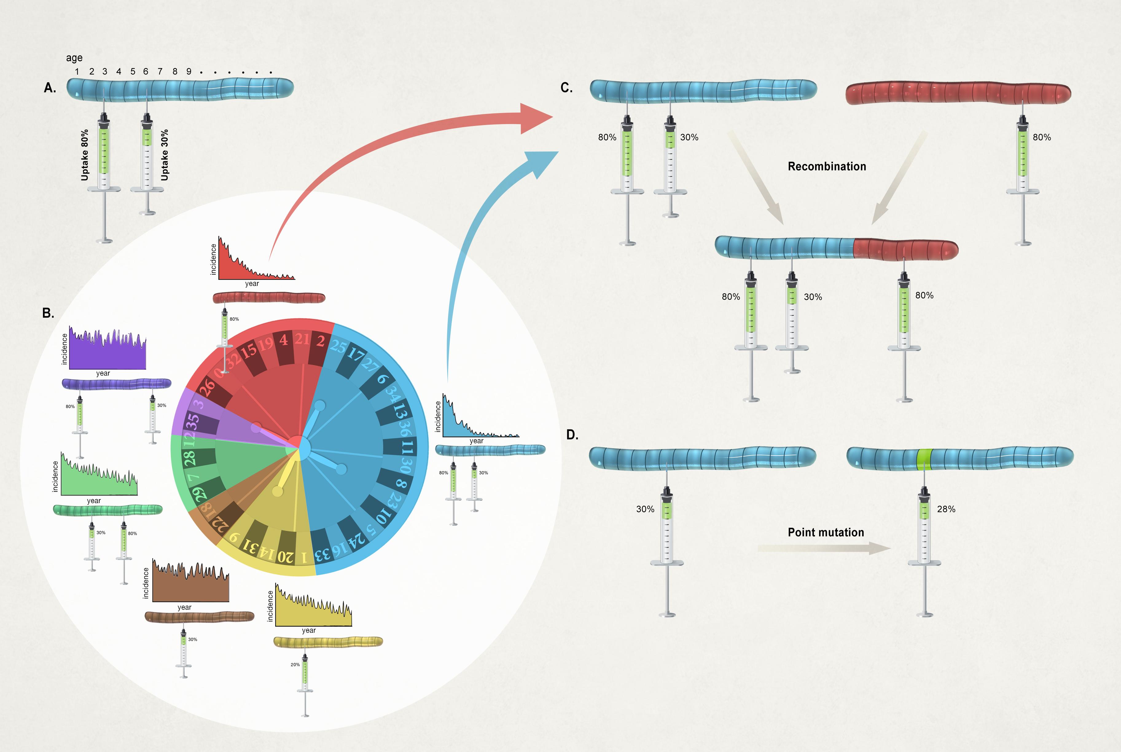 Schematic of genetic algorithm used in Riolo & Rohani (2015).