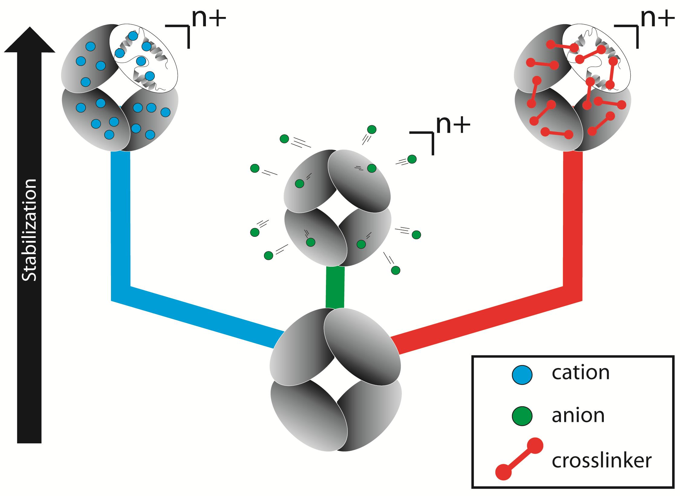 Stabilizingproteincomplexfig