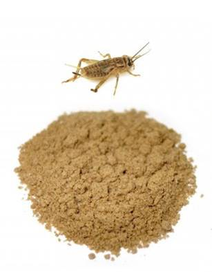 Cricket-flour