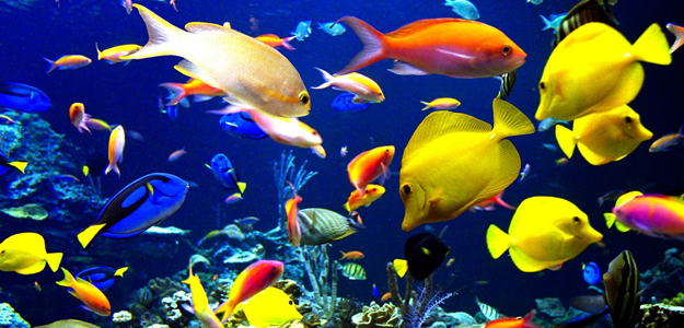 tropical-harmony-tropical-harmony-fish